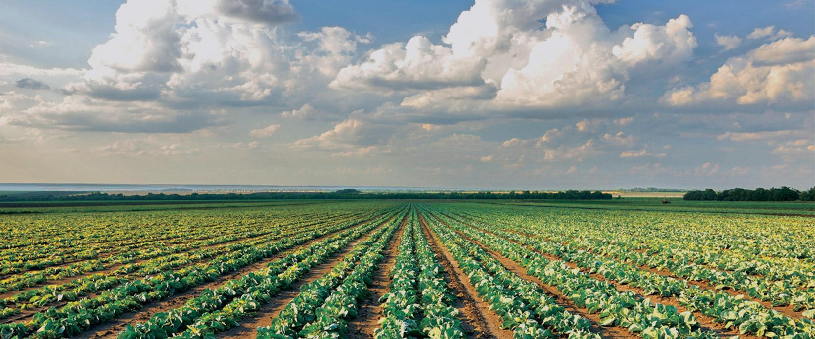 Fields of crops