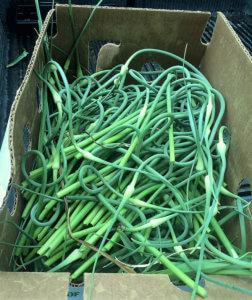 Fresh Local Green Garlic & Garlic Scapes