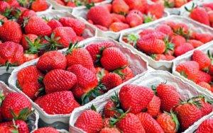 Local North Carolina Strawberries on the Way!