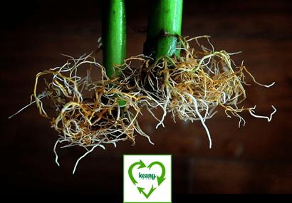 Sustainability Update: Local Hydroponics