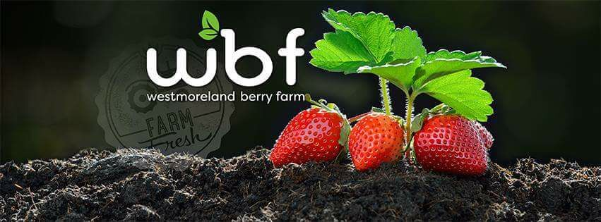 Sustainability Update: Westmoreland Berry Farms
